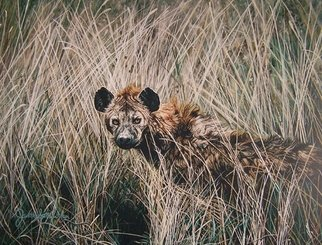 Judith Smith Wilson; Lake Tuskanas Hyena, 2007, Original Watercolor, 11 x 14 inches. Artwork description: 241  Spotted Hyena peering from the grass.  Original painting done from one of Judith Smith Wilson' s photos from Kenya East Africa.  Original' s Price reduced from $l, 800. 00, to 950. 00.  Open Edition Prints Available.  $45. 00 ...