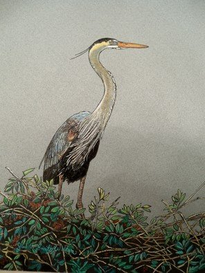 Judith Smith Wilson; Magnificient Blue Heron, 2010, Original Watercolor,   inches. Artwork description: 241  Blue Heron waiting on nest for his mate.  ...