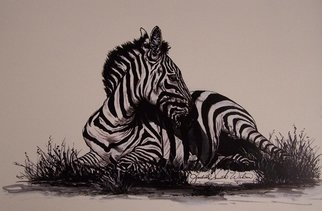 Judith Smith Wilson; Reflections Of Zebra, 1999, Original Watercolor, 11 x 14 inches. Artwork description: 241  Zebra resting in twilight. Pen& Ink with Ink wash.  Original $750. 00.  Open Edition Prints. $45. 00. ...