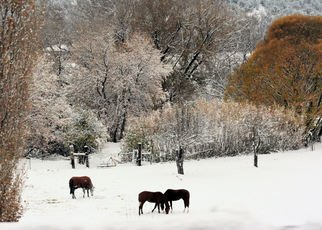 Tammy Gatten; First Snow, 2007, Original Photography Color, 20 x 16 inches. Artwork description: 241  The first snow on orange trees in the mountains of New Mexico, with grazing horses. ...