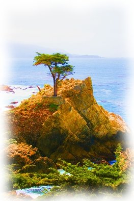 Tammy Gatten; The  Famous Tree, 2008, Original Photography Color, 16 x 20 inches. Artwork description: 241  Driving up to Big Sur we found a famous tree that has been in many movies. Very magestic. ...