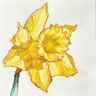 Austen Pinkerton; An Easter Daffodil, 2020, Original Watercolor, 16 x 16 cm. Artwork description: 241 Design foran Easter greeting card...