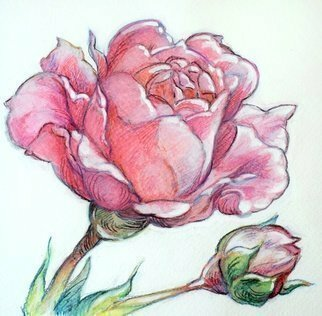 Austen Pinkerton; Rose And Bud, 2020, Original Watercolor, 16 x 16 cm. Artwork description: 241  Rose and Bud , Aquarelle crayon, 16 x16cm. Finished last weekend. Second in a  flower  series. ...
