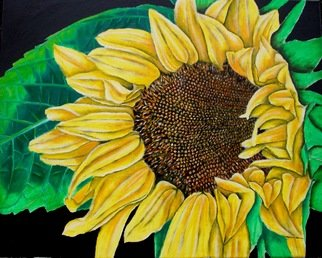 Aaron Lawrence; The Sunflower, 2011, Original Painting Oil, 24 x 18 inches. Artwork description: 241   recent oil painting of a sunflower in bloom ...