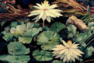Lesta Frank; White Waterlily 2, 2001, Original Watercolor, 14 x 10 inches. Artwork description: 241 This painting was done while I sat in front of a friend' s lily pond. I love the drama of the rich contrasts of deep darks and delicate transparent lights. This is a giclee print of the original watercolor....