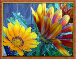 Berit Nelson; Flowers From My Garden, 2006, Original Photography Color, 14 x 11 inches.
