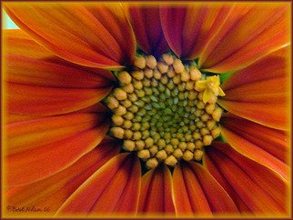 Berit Nelson; Mexican Sunflower, 2006, Original Photography Color, 48 x 24 inches.