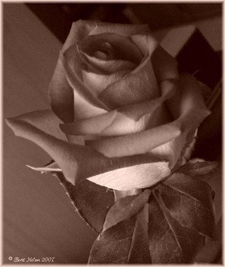 Berit Nelson; Sepia Rose, 2007, Original Photography Other, 8 x 8 inches.