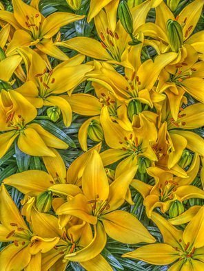Bruce Lewis; The Lilies, 2017, Original Photography Digital, 15 x 20 inches. Artwork description: 241 The yellow lilies provided a rather confused but beautiful pattern. I can still smell these golden trumpets playing their scent. Archival digital print, limited ed inion of ten. ...