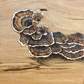 Bonie Bolen; Turkey Tails, 2017, Original Printmaking Woodcut, 6 x 6 inches. Artwork description: 241 small wood burning and paint on wood...