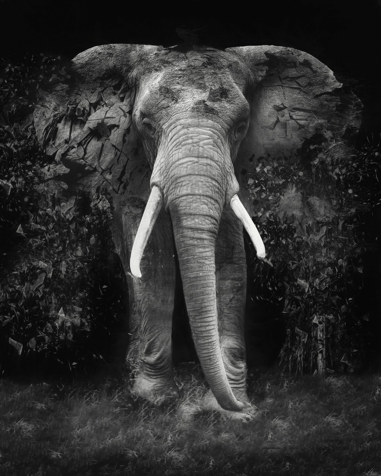 Erik Brede; The Disappearance , 2019, Original Photography Black and White, 40 x 50 cm. Artwork description: 241 New Exclusive 45 format edition for maximum impact. 40x50cm50x60cm Pigment Print on HahnemA1/4hle Fine Art Baryta in a limited edition of 25 + 1AP. ...