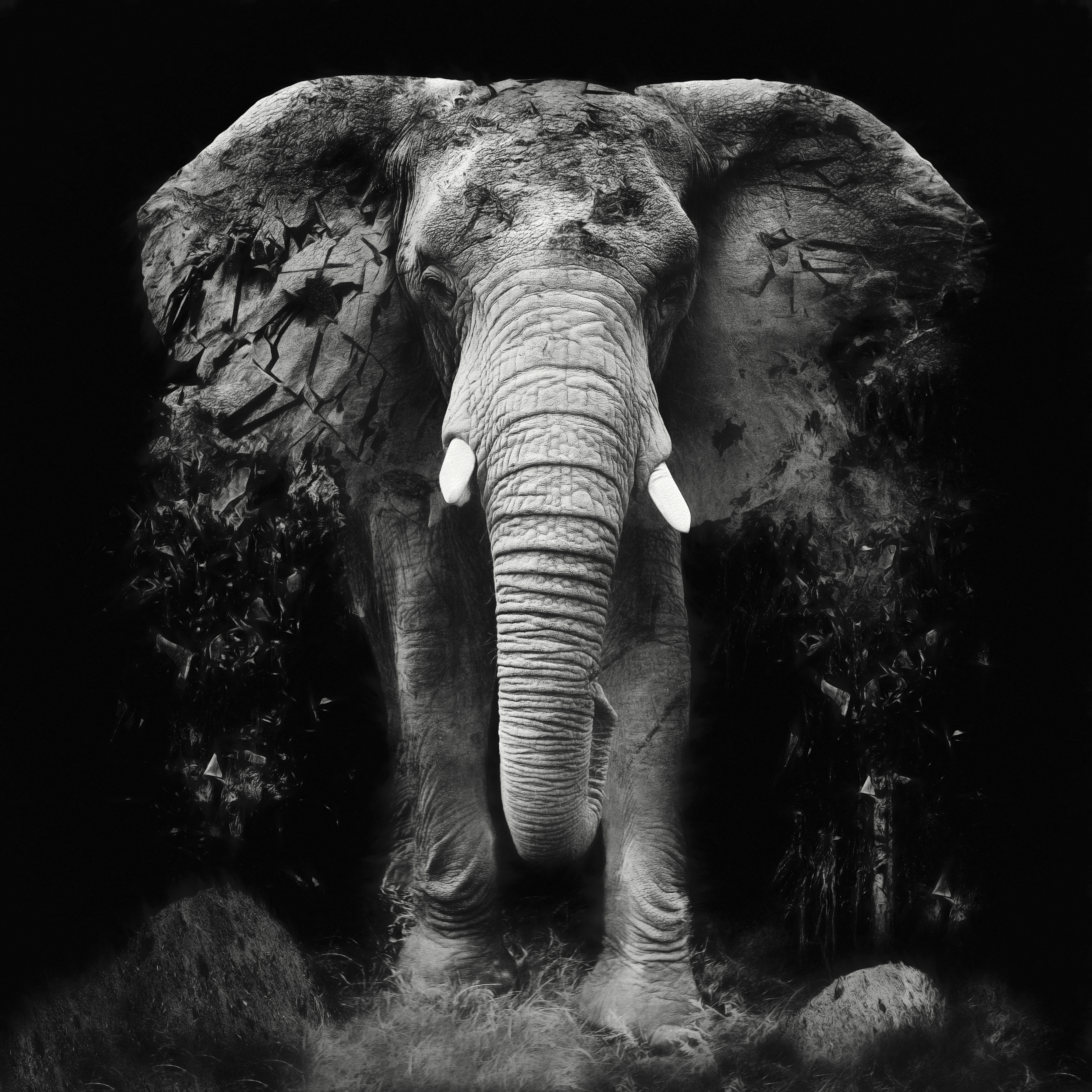 Erik Brede; The Disappearance 7 Of 10, 2014, Original Photography Black and White, 60 x 60 cm. Artwork description: 241 Only 4 prints left  The Disappearance of the Elephant - Unique piece of photoart that is both amazingly decorative but also has a deep political message aEUR