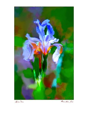 Brian Devon; mountain iris, 2017, Original Printmaking Giclee, 16 x 20 inches.