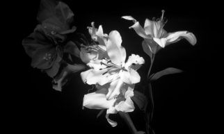 Bruce Panock; Black And White Flowers, 2009, Original Photography Black and White, 16 x 21 inches. Artwork description: 241  A different perspective on a flower.  The absence of colors opens the textures of the flower.Images are pritned on archival papers with archival inks.Different sizes are available upon request.       ...