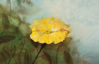 Carolyn Judge; Hibiscus, 2010, Original Watercolor, 28 x 21 cm. Artwork description: 241  This photograph was taken in the early morning light in Manly, Australia.  It makes for a great painting!  ...