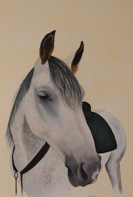 Carolyn Judge; Saddling Up, 2010, Original Watercolor, 26 x 38 cm. Artwork description: 241  I rode this horse while travelling through Hanmer Springs in the South Island of New Zealand.  The horse is a professional endurance racer.  I found it hard to hold onto him!   ...