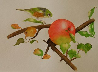 Carolyn Judge; Waxeye And Apple, 2010, Original Watercolor, 30 x 24 cm. Artwork description: 241  A waxeye is a native New Zealand bird.  I like this image of the bird not being able to resist a big juicy apple! ...