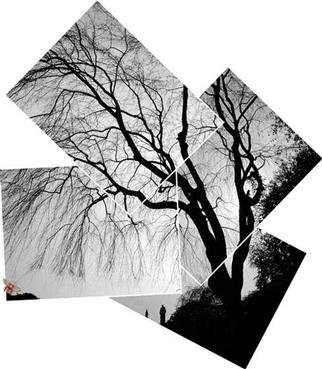 Bruce Lewis; TreeShadow, 2000, Original Photography Other, 11 x 11 inches.
