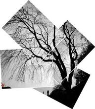 Artist: Bruce Lewis', title: TreeShadow, 2000, Photography Other