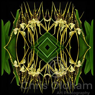 Chris Oldham; Bassia Rex Orchid, 2016, Original Photography Digital, 24 x 24 inches. Artwork description: 241  Bassia Rex Orchid photographed and multiplied to produce an amplification of the geometry and harmony of form ...