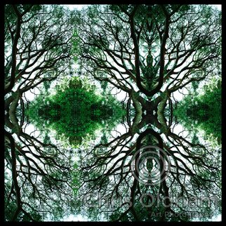 Chris Oldham; Buddhas Tree, 2016, Original Photography Digital, 24 x 24 inches. Artwork description: 241  Reflected nature image from the Heart of a Beech Tree revealing to me a Buddha sitting in a tree. ...