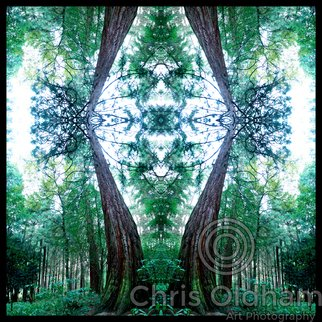 Chris Oldham; Redwood Mystic, 2016, Original Photography Digital, 24 x 24 inches. Artwork description: 241  Giant Sequoia Growing in the forest reveals a mystical entrance to a new world of imagination. ...