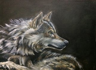 Colin Mark Mowat; Grey Wolf, 2019, Original Painting Oil, 8 x 10 inches. Artwork description: 241 Painting of a grey wolf from a local wildlife park in scotland. ...