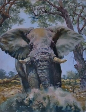 Sonja Grobler; Majestic Bull, 2013, Original Painting Oil, 60.5 x 77 cm. Artwork description: 241  Charging elephant bull ...