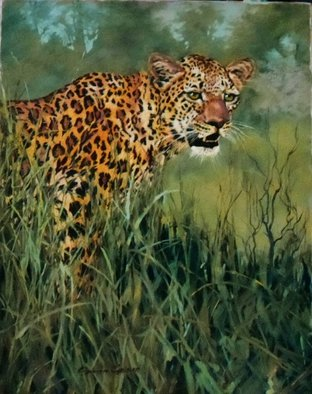 Sonja Grobler; Watchful, 2013, Original Painting Oil, 51 x 78 cm. Artwork description: 241  Leopard looking into the distance, standing in long grass ...
