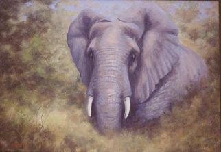 Colleen Balfour; Breaking Cover, 2001, Original Painting Oil, 24 x 32 inches. Artwork description: 241 The mighty African elephant, a master at using the bush to disappear at a moments notice, breaks cover with equal suddeness.Oil on masonite...