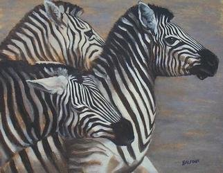 Colleen Balfour; Predator Alert, 2001, Original Painting Oil, 20 x 16 inches. Artwork description: 241 Oil on canvas boardunframedWhen galvanised by fear, zebras herd and stampede....