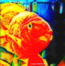 Artist: Katie Pfeiffer's, title: Love Fish, 2014, Photography Color