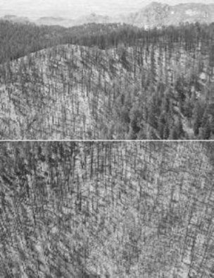 Daniel King; Fire Damage, 2004, Original Photography Black and White, 10 x 14 inches. Artwork description: 241  Aerial reflection on geographic/ environmental management ...