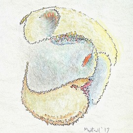Dave Martsolf, , , Original Drawing Pencil, size_width{turtle_helmet-1539205769.jpg} X 7 inches