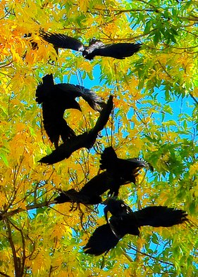 Dennis Gorzelsky; Taking Off, 2015, Original Photography Digital, 15 x 21 . Artwork description: 241 On a beautiful autumn day in Northern Colorado, a group of birds had gathered in a large tree.  When suddenly one took off, all the others quickly followed. ...