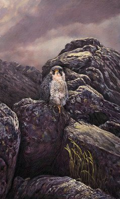 Dennis Mccallum; Peregrine Falcon, 2015, Original Mixed Media, 15 x 25 cm. Artwork description: 241  Peregrine Falcon bird of prey    With a Puffin!      ...