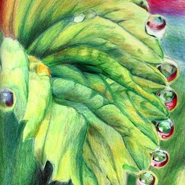 Donna Gallant, , , Original Drawing Pencil, size_width{raindrops-1513887359.jpg} X 12 inches
