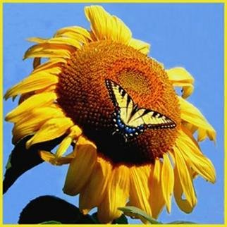 Emily Reed; A Swallowtail And Its Sun..., 2005, Original Photography Color, 10 x 10 inches. Artwork description: 241 A swallowtail butterfly enjoying a summer sunflower....