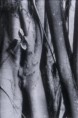 Ellen Rosenberg, 'Banyan Tree Male And Female', 2005, original Photography Silver Gelatin, 20 x 24  inches. Artwork description: 1911 Artist Statement for my Nature photographs
