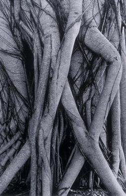 Ellen Rosenberg, 'Banyan Trees Legs Entwined', 2005, original Photography Black and White, 20 x 24  inches. Artwork description: 1911 Artist Statement for my Nature photographs