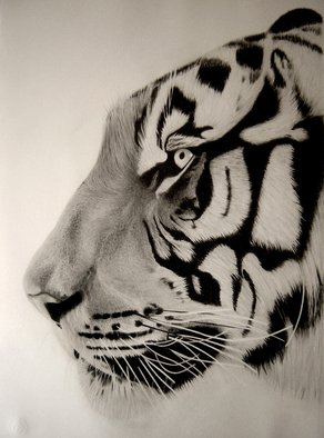 Eric Stavros; Tiger Close Up, 2011, Original Drawing Pencil,   cm. Artwork description: 241  graphite pencils from 2H to 8B( staedler mars lumograph)Schoeller smooth paper 50x35cmabout 15 hours  ...