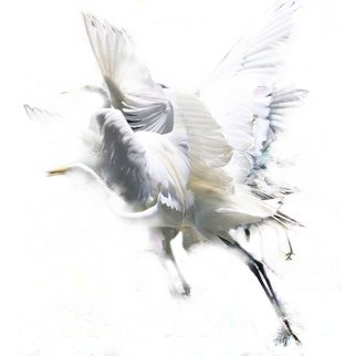 Evelyn Espinoza; Crane, 2015, Original Photography Digital, 15 x 15 inches. Artwork description: 241 The moments of motion, the memory of the fluttering, flapping and flying of a crane. A layered montage of photographs. Ethereal and light.  ...
