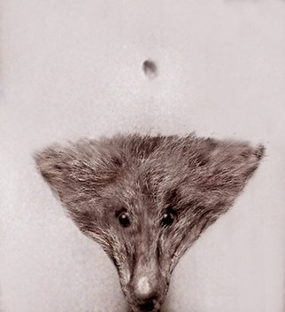 Itzhak Ben Arieh; THE FOX, 2010, Original Photography Other, 20 x 30 cm. Artwork description: 241             FANTASTIC PHOTOGRAPHY            ...