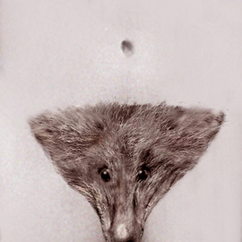 Artist: Itzhak Ben Arieh, title: THE FOX, 2010, Original Photography Other
