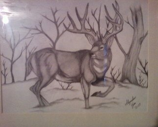 Alejandro Jake; Mule Deer , 2009, Original Drawing Pencil, 11 x 8 inches. Artwork description: 241  A drawing I Did of an Mule Deer ...