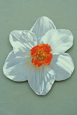 Stephen Fessler; Daffodil, 2013, Original Painting Oil, 23.7 x 26.3 inches. Artwork description: 241   A blossom in the Spring sun.      ...