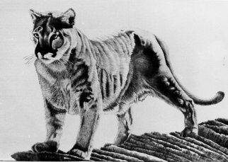 Bob Filbey; Sentinel, 1988, Original Printmaking Lithography, 26 x 19 inches. Artwork description: 241  mountain lion cougar panther rock  ...