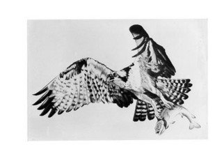 Bob Filbey; The Catch, 1988, Original Printmaking Lithography, 26 x 19 inches. Artwork description: 241  flying osprey trout ...