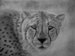 Andrew Dyson; Spotted You, 2010, Original Drawing Pencil, 42 x 29 cm. Artwork description: 241    Original Graphite drawing of a a wild Cheetah, intense moment as the fastest land cat takes an interest in you, on Watercolour paper 160 lb cold pressed ...