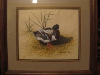 Heidi Bacon; Mallard Preening, 1985, Original Printmaking Giclee - Open Edition, 16 x 20 inches. Artwork description: 241  Giclee reproduction on canvas of an original felt pen drawing of a Mallard duck preening its feathers.       ...